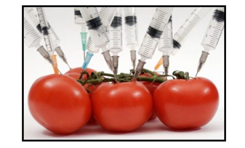 Letter to the Editor: Dangers of genetically-modified food