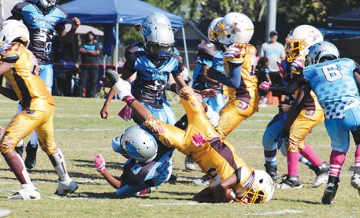 Panthers win battle of the little league undefeateds