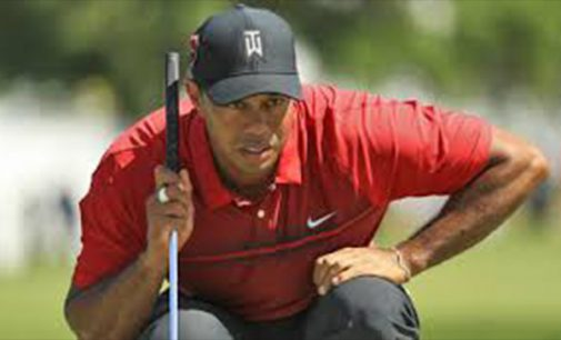 Tiger Woods is swinging back on course