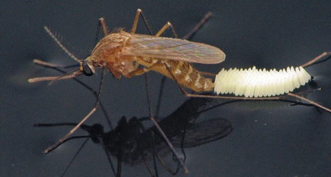 Vector Control fights mosquitoes in Forsyth