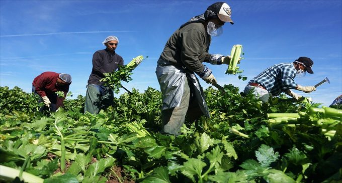 Commentary: If farmworkers are 'essential,' why are they treated so badly?