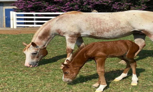 H.E.R.O. welcomes a second  foal – seeks public input on name